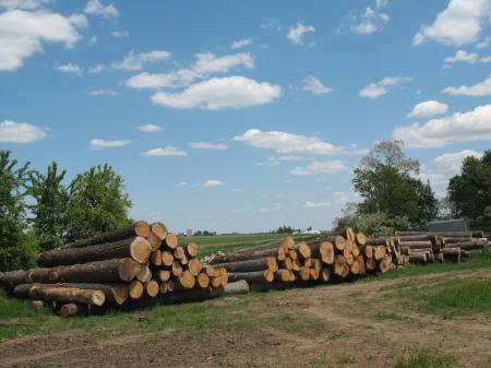 Logs in the Yard De Forest, WI