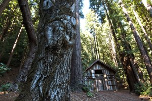 marshall barn in Santa Cruz Mtn 1