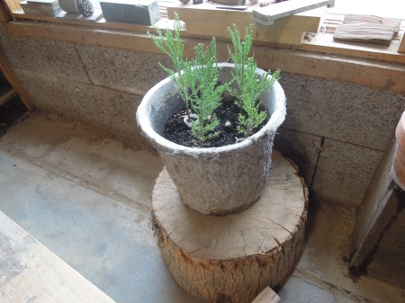 Grove of Giant Sequoia in My Shop